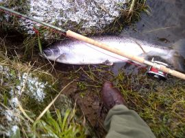 Spring Dee Salmon on the new Walker 15'6""